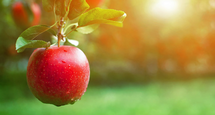 The Secret Life of Apples: Skin and Hair's Favorite Snack